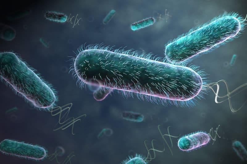 ecoli bacteria food hygiene